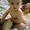 массаж  детский до года на дому  - Изображение #1, Объявление #631538