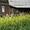 Продам дачу,  5-й км дороги на Мельничную Падь,  садоводство «Надежда» #882645