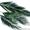 Стабилизированные растения оптом Сибирь #1016520