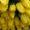 Голландские тюльпаны оптом к 8 марта 2015 #1210964