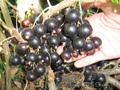 Плодово-ягодный лпх питомник