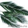 Стабилизированные растения оптом Сибирь
