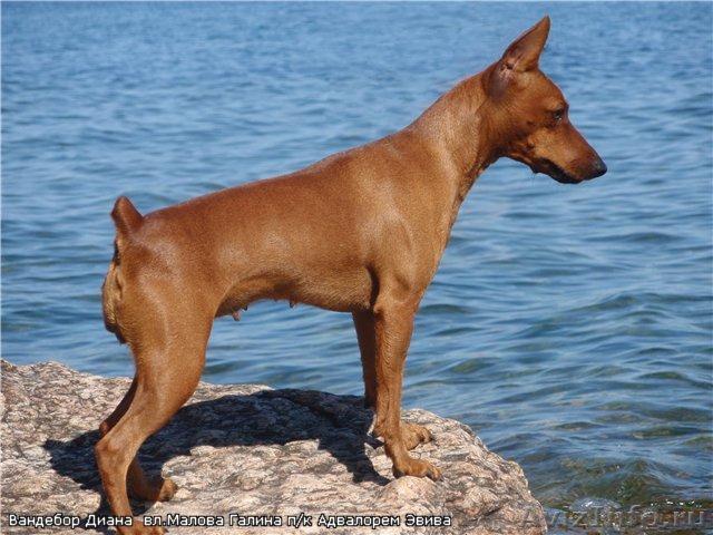 Собаки и щенки в дар бесплатно отдать щенка или собаку в
